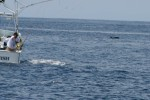 Jaws-the sailfish