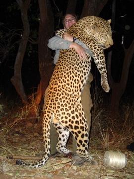 zambia_hunting_leopard_01[1]